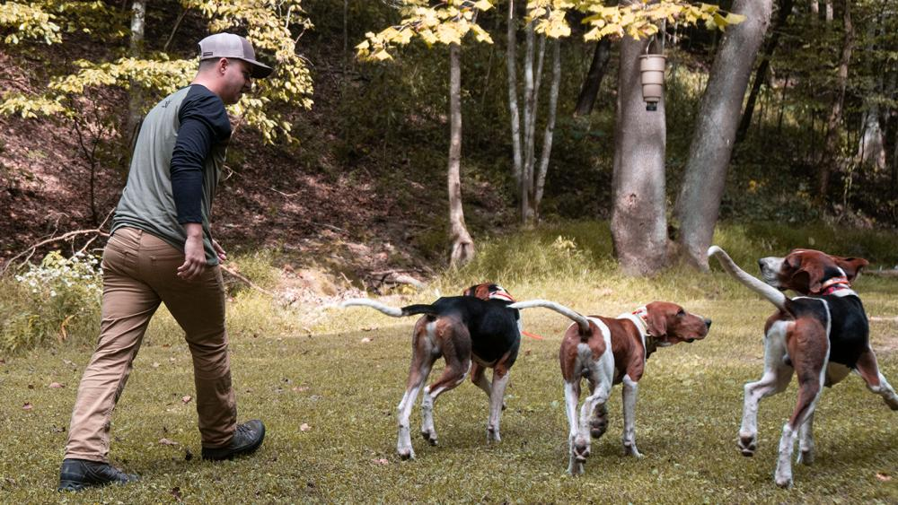 Trainer walking into the woods with his hound hunting pack.