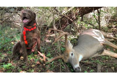 Everything you need to know about calling in a tracking dog to recover wounded game