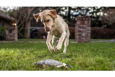 Bird Dog Training Fundamentals