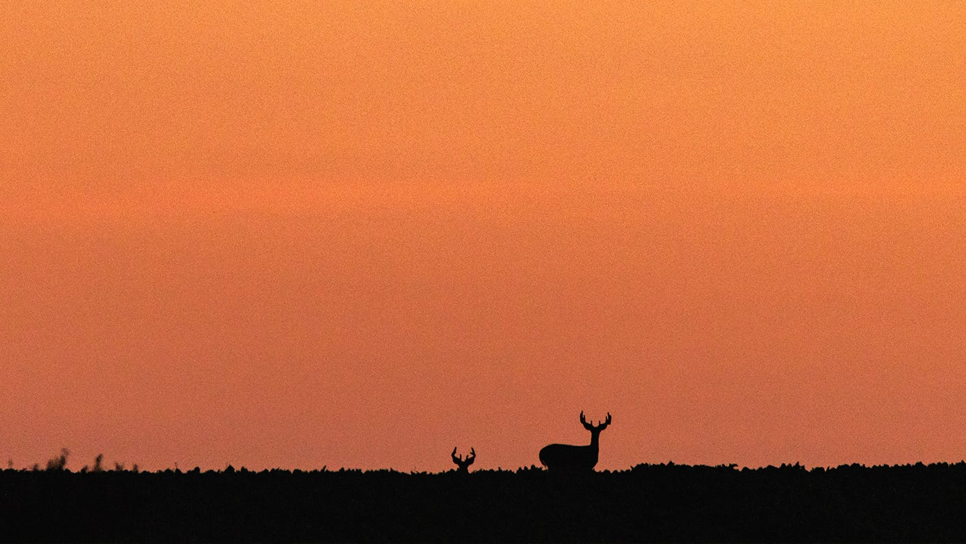 As a buck's antlers continue to grow, it's success can have a lot to do with it's ecosystem's success.