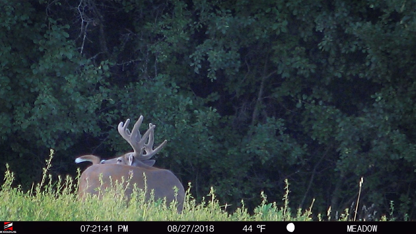 Part Three: Why is Trail Camera Placement Important Based on Season?